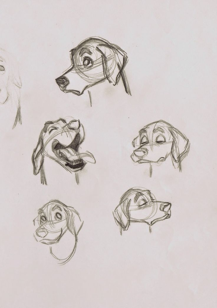 A few of Milt Kahl's many facial studies, based on the appearance of life Dalmatians, brought into the studio for observation.