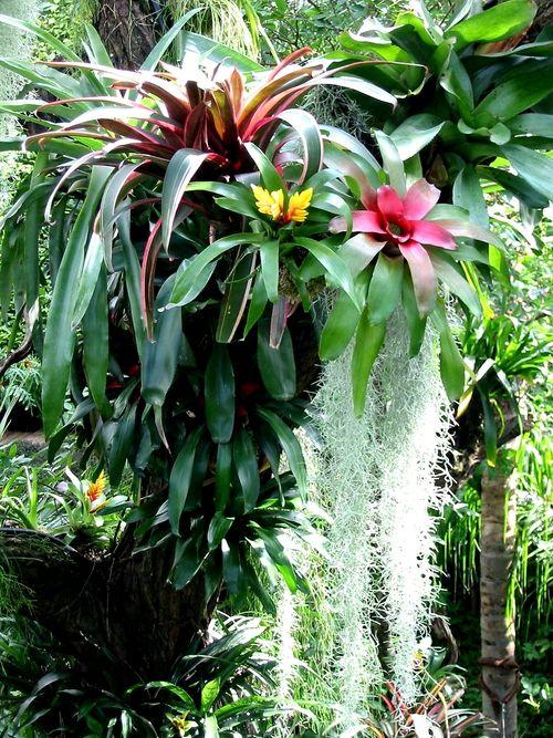 Tropical - bromeliads.