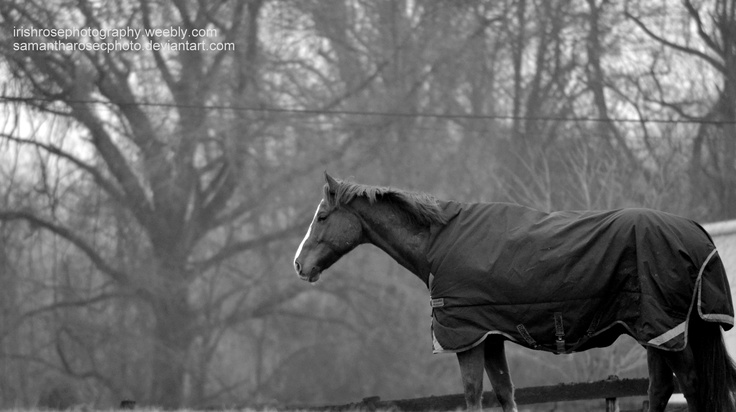 A horse at the barn on a foggy morning of a show day