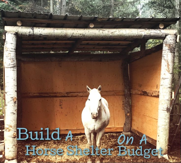 how to build a horse lean to shelter