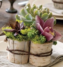 succulents in birch bark cups