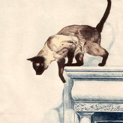 Siamese cat <3