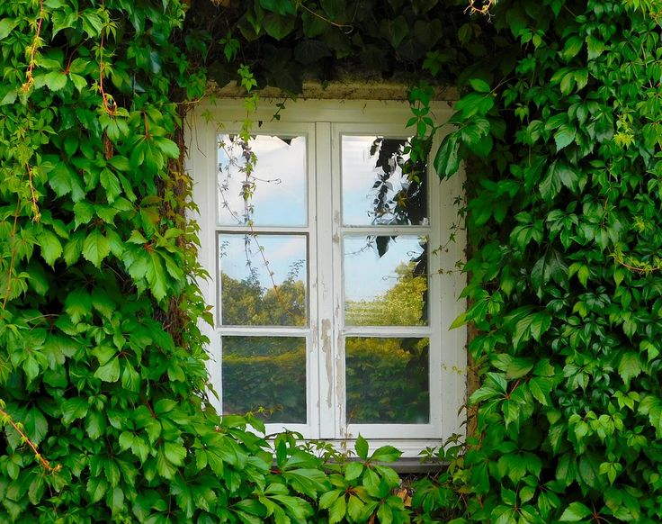The word 'window' originates from the Old Norse 'vindauga', from 'vindr - wind' and 'auga - eye', meaning 'wind eye'.