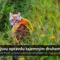 Další citáty na http://deelay.cz #czech #inspirace