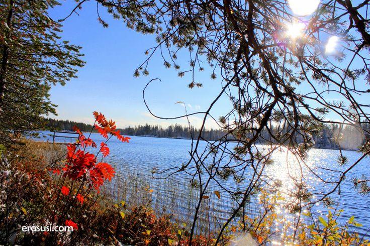 Winter is coming to Kuusamo...