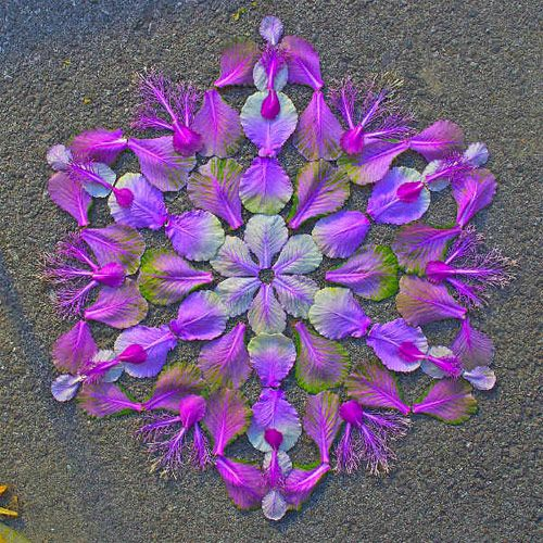 Flower mandalas by artist Kathy Klein thank you kathy, this is so lovely to absorb ~