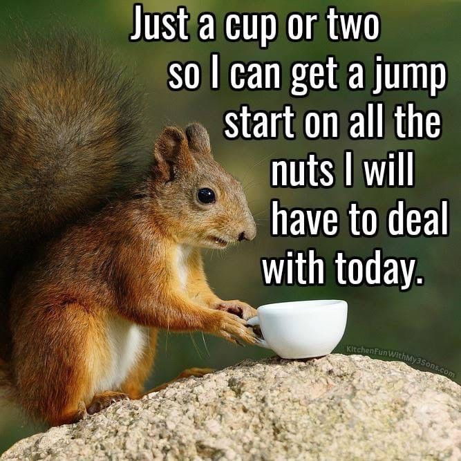 Pin By Ashley Stine On Squirrels In 2020 Morning Quotes Funny Coffee Humor Funny Good Morning Quotes