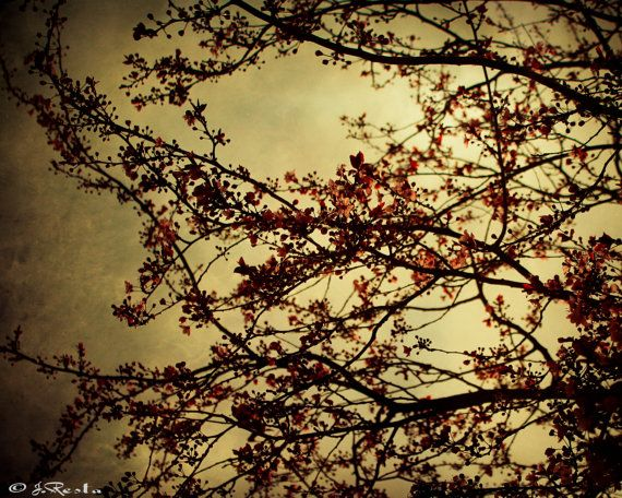Nature Photography Photography Print Flowers by BelmondoVintage
