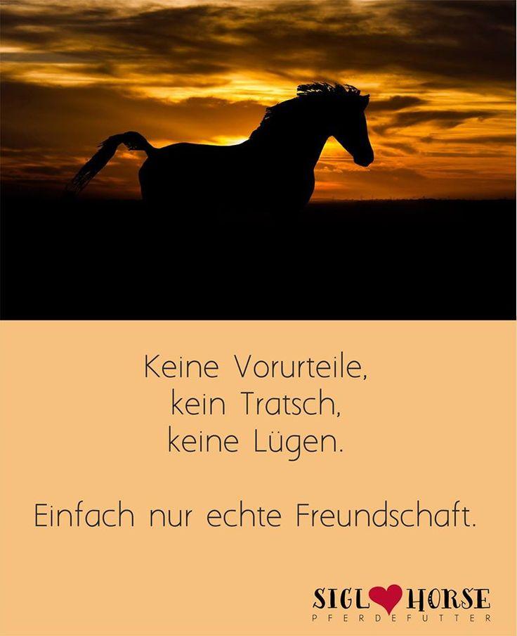 Keine Vorurteile, kein Tratsch, keine Lügen. Einfach nur echte Freundschaft.  #pferd