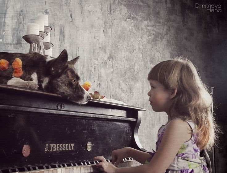 Play me more? ..... Photos in vintage style #studiophotographi #animalsphotographi #dogphoto