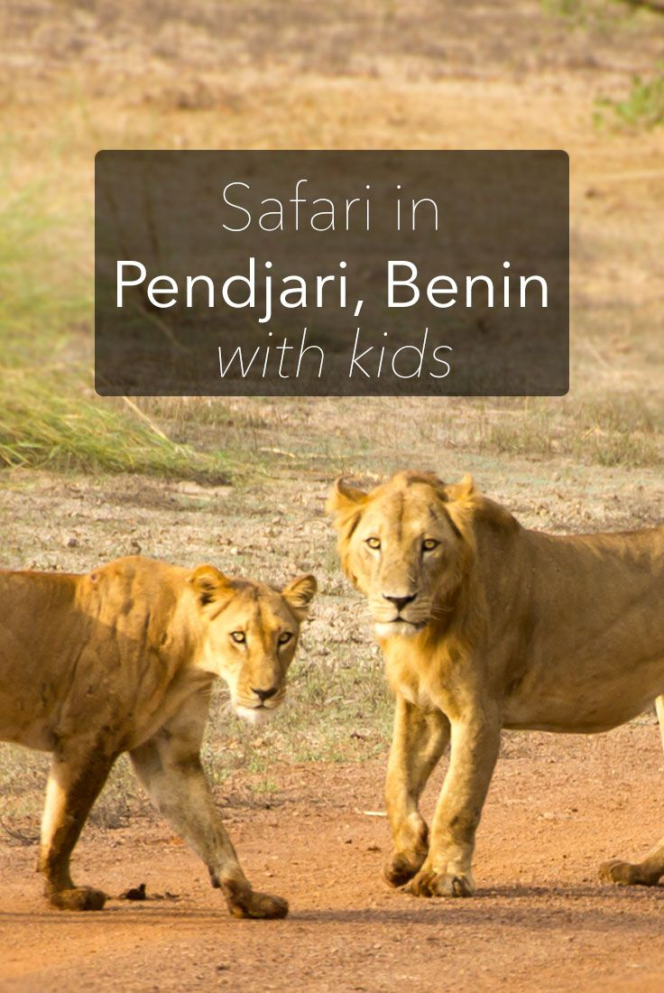 A safari is one of the highlights of a trip to Africa. If you're travelling to Benin, a safari in Pendjari National Park should be high on your list.