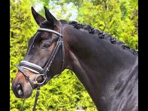 www.sporthorses-online.com 2010 top Dressage prospect for sale