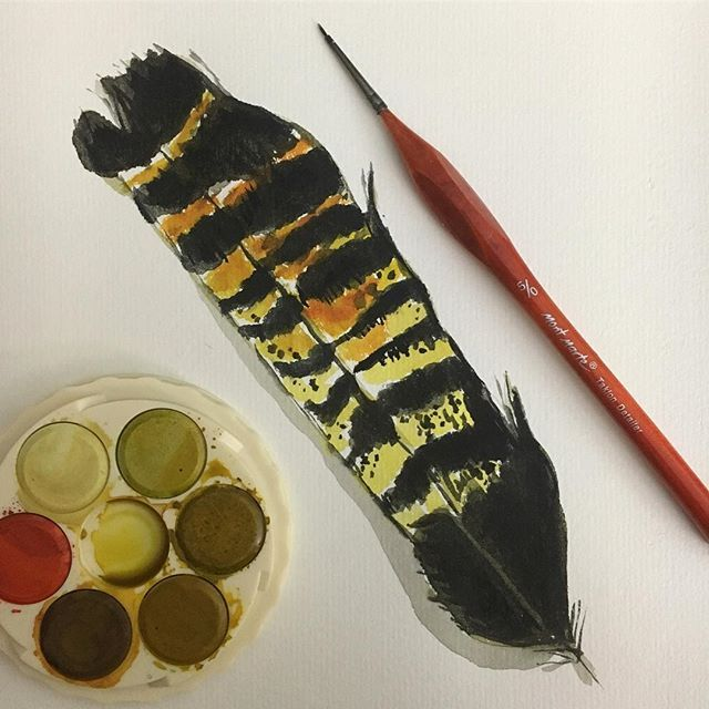 Water colour painting of Black Cockatoo feather for Bird lovers, using micador paints, by Andrea Hamann (Strongsoutherly Art)