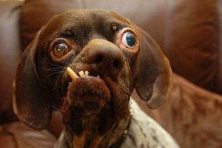 10 of the World's Ugliest Dogs Aww, there are no ugly dogs!