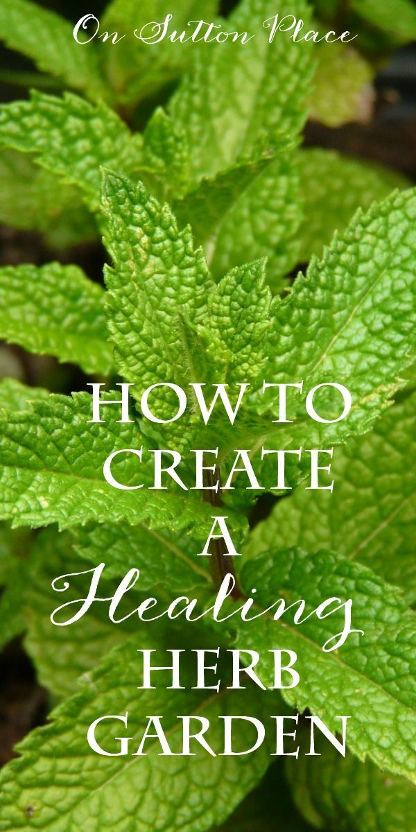 Create a Healing Herb Garden   Six herbs you can grow yourself that when used fresh or dried, have amazing health benefits. #Sponsored