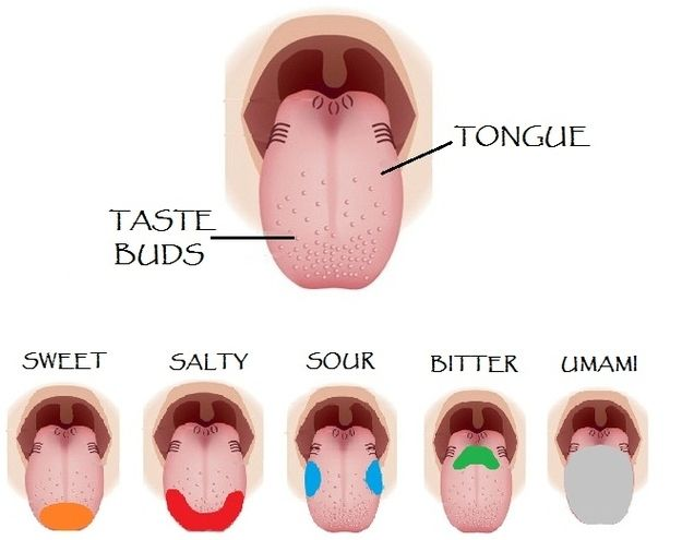 There are not different areas of the tongue dedicated to different tastes. All different tastes can be detected on all parts of the tongue. | 32 Things You Always Believed That Simply Aren't True