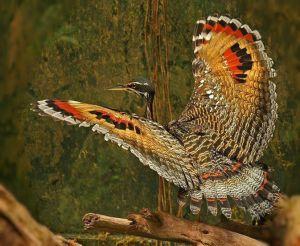 Fauna de la selva peruana - La tantarilla