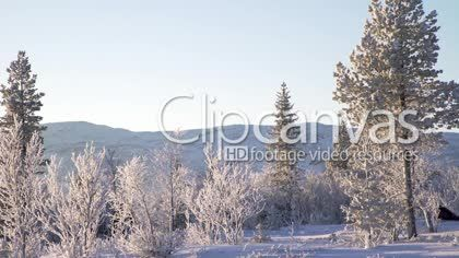 A group of people going cross country skiing in Jamtland, a mountainous district in norhtern Sweden HD Stock Footage Clip. Wide shot. 2016-01-10, SWEDEN.