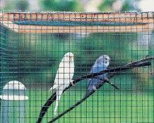 Grillage soudé galvanisé pour la réalisation de cages ou volières.