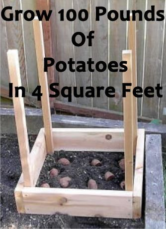 How To Grow 100 Pounds Of Potatoes In 4 Square Feet - Gardening Designing