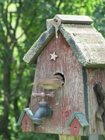 Birdhouse with a water spout perch!