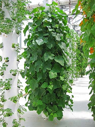 1000 images about Aeroponic gardening on Pinterest Gardens