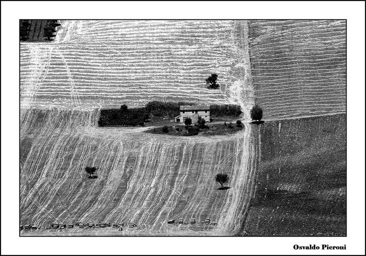 rural landscape bw