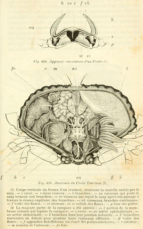 Dessins scolaires zoologie dessins scolaires zoologie for Anatomie du meuble