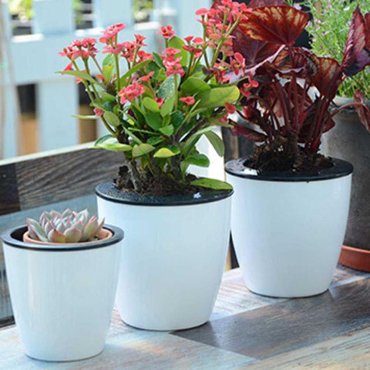 Fashioable Automatic Self Watering Flower Plants P*T Put 640 x 480