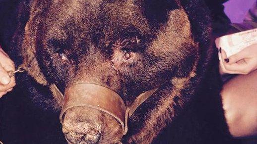 Banning animals in a night club