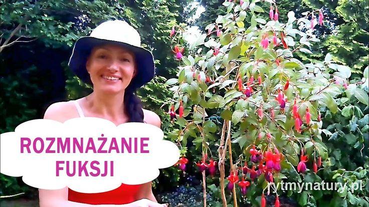 Jak rozmnożyć fuksję /ułankę/-video #kwiatysapiekne #rytmynatury#fuksja#ułanka#kwiaty#kwiaty#rośliny #balkon#taras#rośliny#natura
