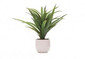 Our Range of Indoor Plants | Super A-Mart