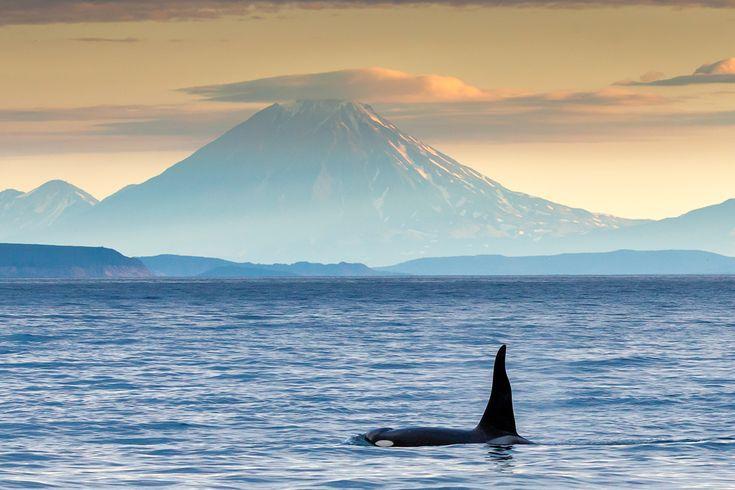 Денис Будьков_Kamchatka, volcano Koryaksky, whale