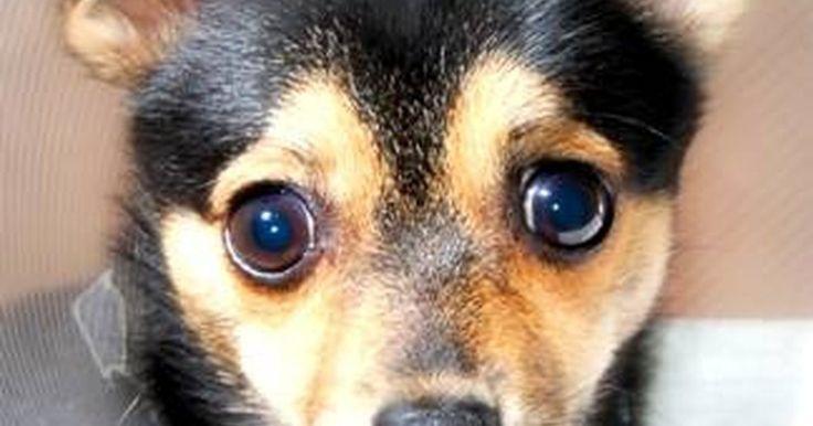 """Costo de una cirugía de rodilla para perro. Las cirugías de rodillas son comunes entre los perros porque las rodillas caninas se dañan fácilmente. En 2003, más de 1 millón de perros tuvieron cirugías de rodilla que sumaron más de US$1,2 billones, según """"Pet Health 101"""" (ver referencias). Pero hay una serie costos relacionados con la cirugía de la rodilla de un perro."""