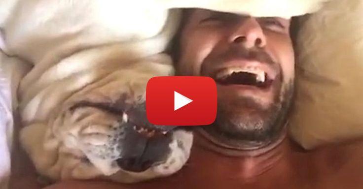 Grumpy dog makes hilarious sounds when woken up