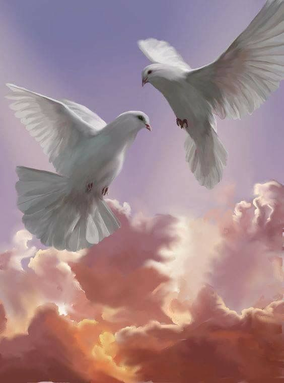 Днем, красивая открытка голубей