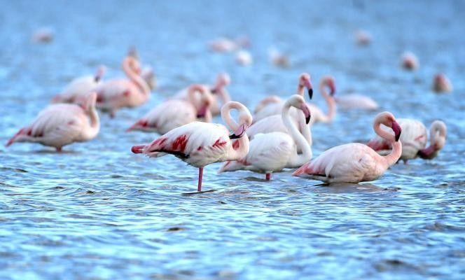 #Pantone #nature #serenity #rosaquarzo