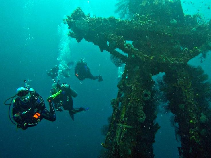 A local PADI pro reveals the top dive sites in Barbados.
