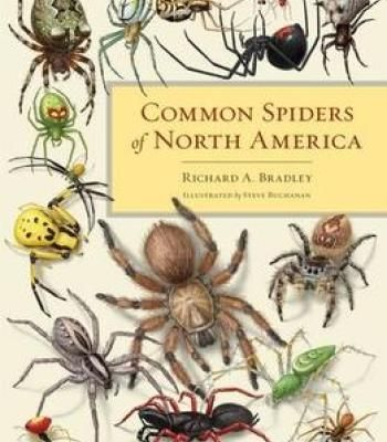 Common Spiders Of North America PDF