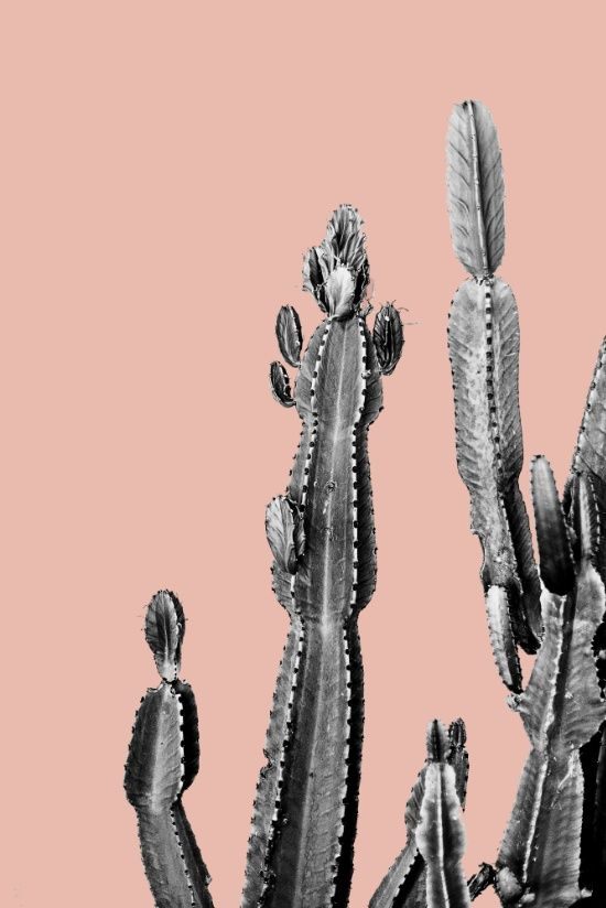 pink cactus friend Art Print, urban jungle trend, botanic trend, cactus trend…