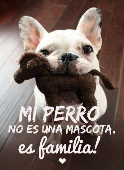 Mi perro no es mascota, es familia!  sweetseasons.com.mx