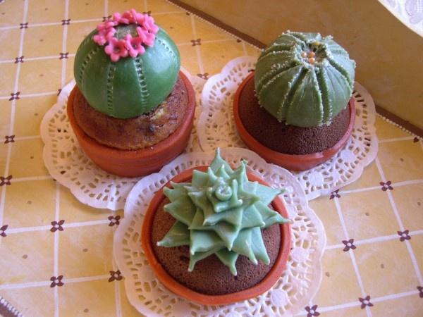 Cactus...attenzione alle spine!