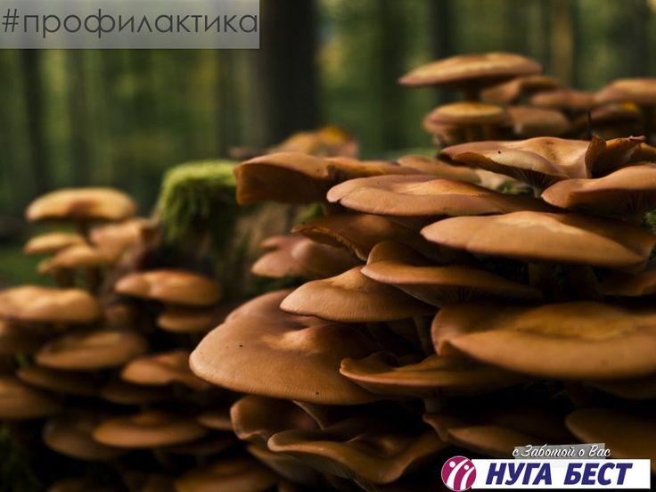 О грибах  Механизм действия многих грибных ядов до сих пор не установлен, поэтому от них нет противоядия. Токсикологи утверждают: если есть подозрение, что в корзину попал ядовитый гриб, нужно выбросить все остальные, даже съедобные, потому что на них могли попасть ядовитые споры. По этой же причине не стоит собирать лесные ягоды, если неподалеку растут подозрительные грибы. Самыми опасными грибными ядами считаются аманотоксины и фаллотоксины, которые содержатся в бледной поганке и вонючем…