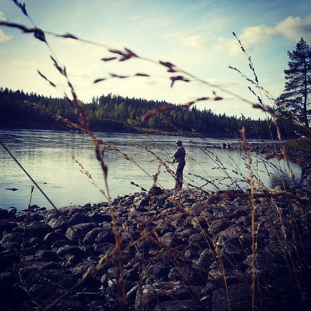 Salmon fishing along Vindelälven, in Gargnäs-Råstrand Laxrike, near Sorsele in Swedish Lapland #flyfishing #sorsele