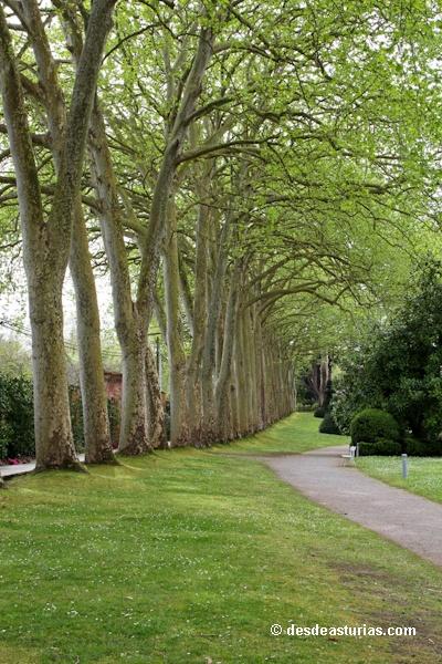 M s de 25 ideas incre bles sobre jardin botanico en for Jardin botanico nocturno 2016