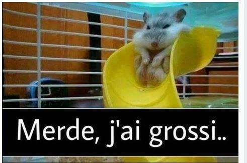 Ce hamster a grossi