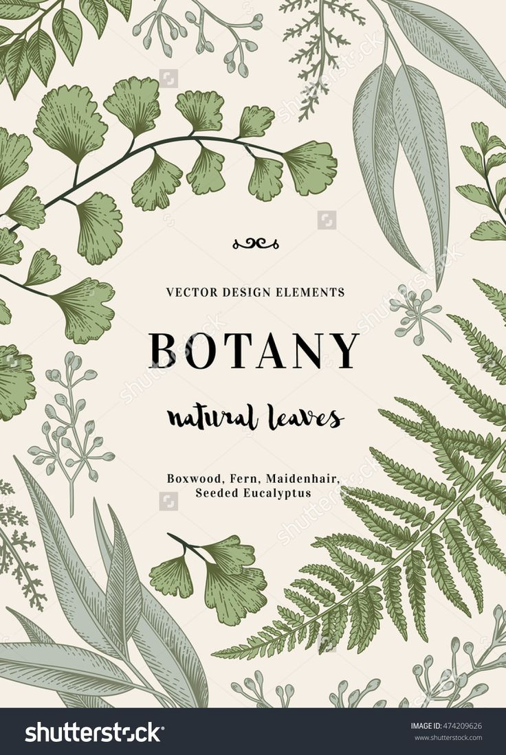 Floral Vector Background. Vintage Invitation With Various Leaves. Botanical Illustration. Fern, Seeded Eucalyptus, Maidenhair. Engraving Style. Design Elements. - 474209626 : Shutterstock