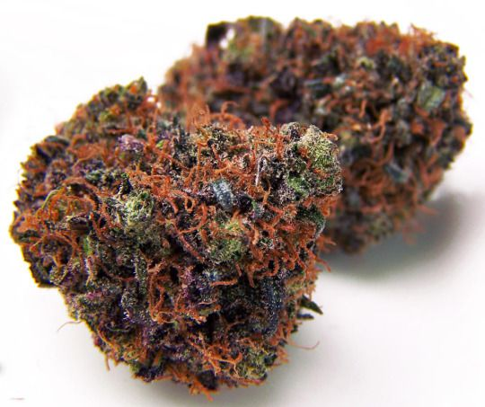 75 Best Images About Beautiful Bud On Pinterest