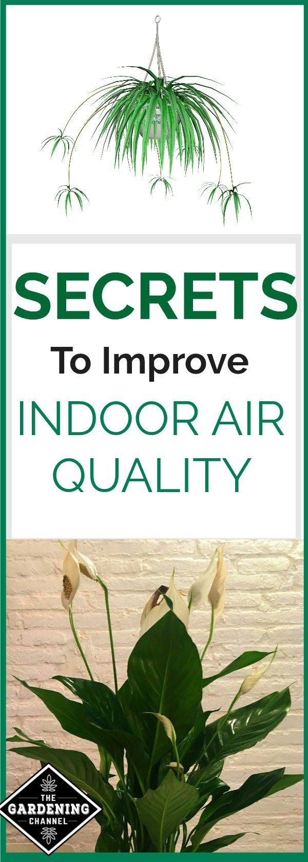 Best 25 indoor air quality ideas on pinterest best for Best plants to improve air quality