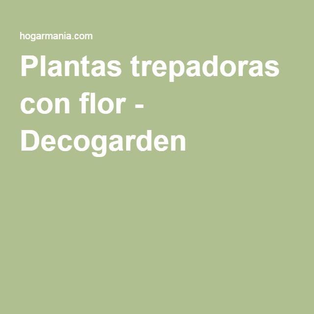 Plantas trepadoras con flor - Decogarden